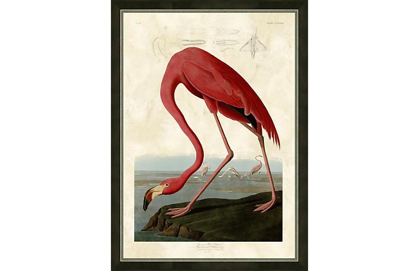 Audubon, Flamingo