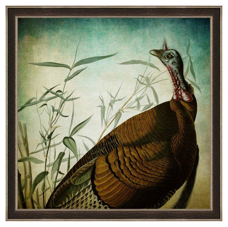 Audubon Turkey Print