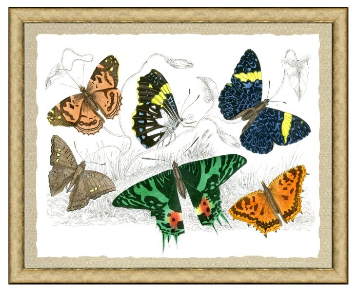 Butterfly Grouping Print I