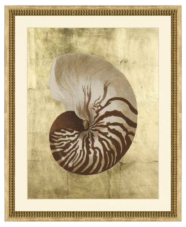 Sepia Shell II with Gold Leaf Background