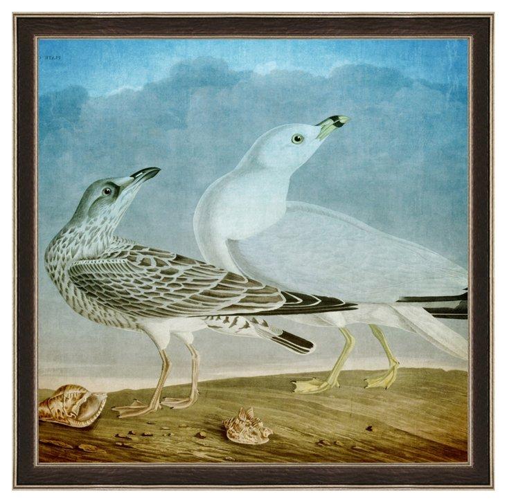 Audubon Sea Gull Print I