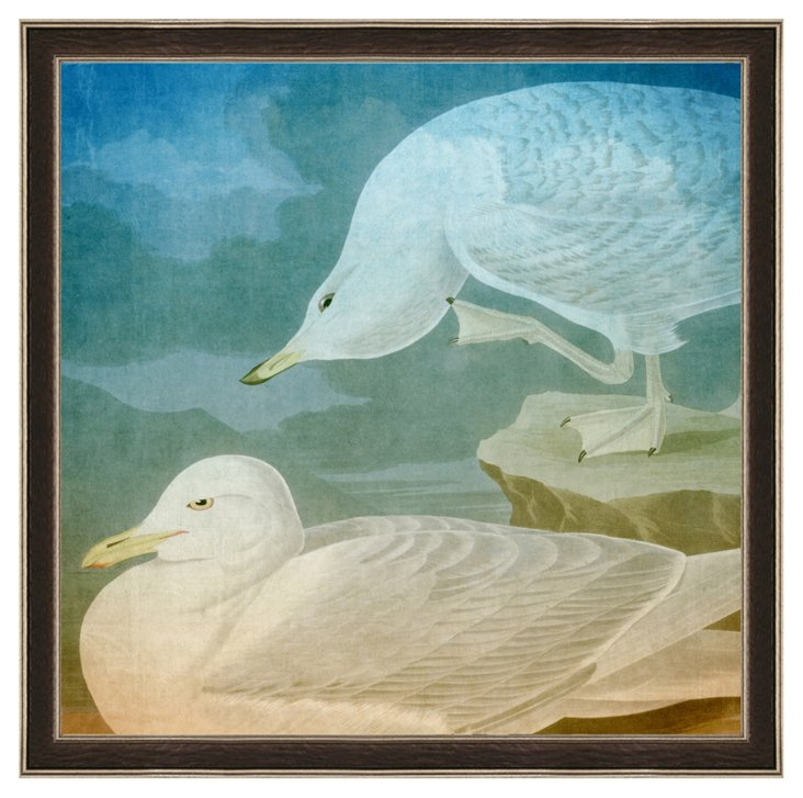 Audubon Sea Gull Print II