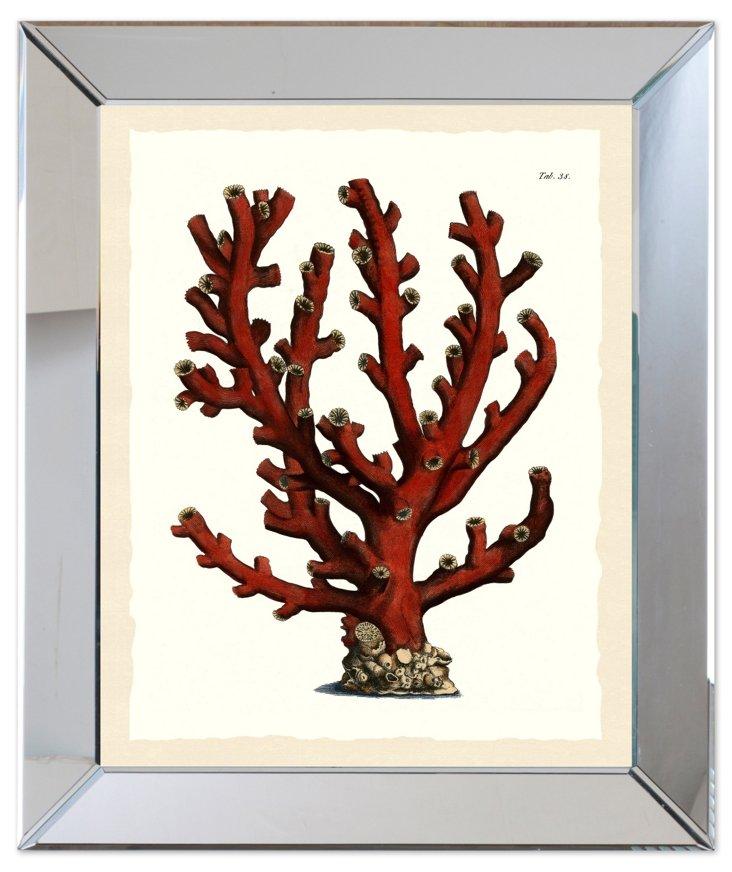 Mirror Framed Red Seaweed Print I