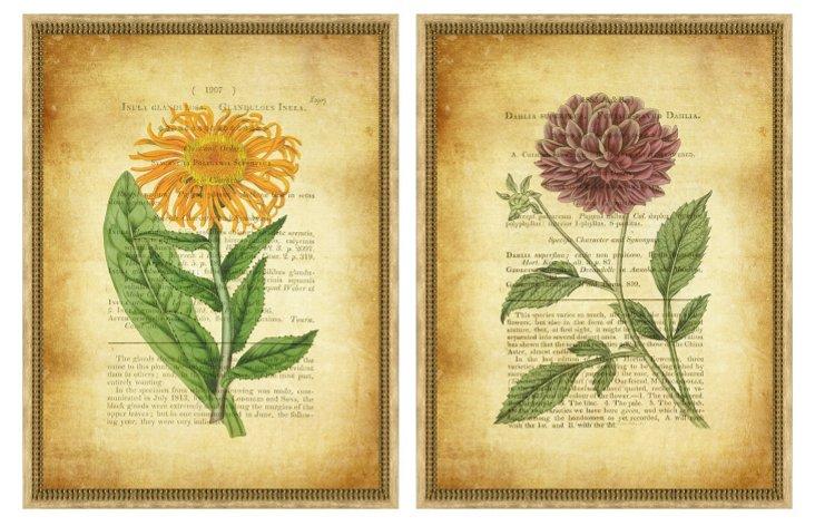 Aged Botanical Pair I