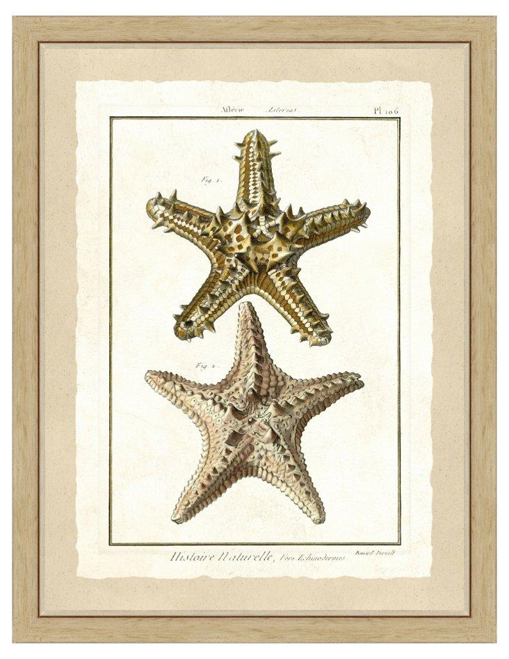 Golden Starfish Print I