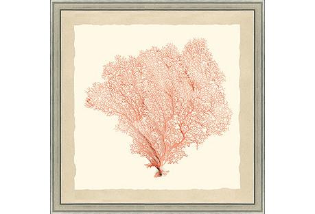 Coral Sea Fan Print I
