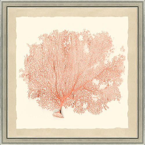 Coral Sea Fan Print II