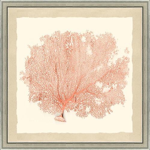 Coral Sea Fan Print II