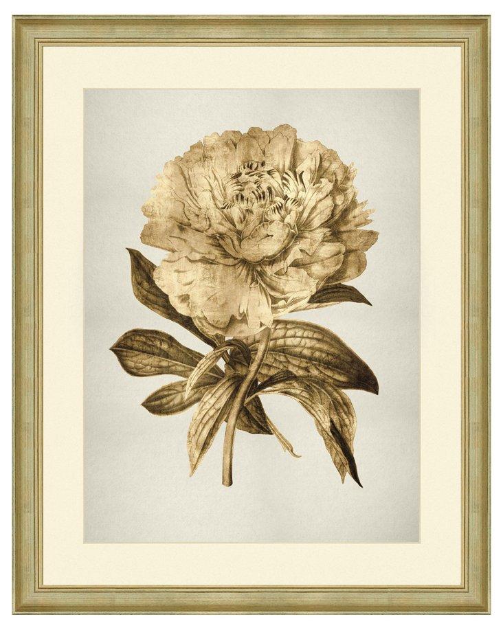 Golden Botanical II
