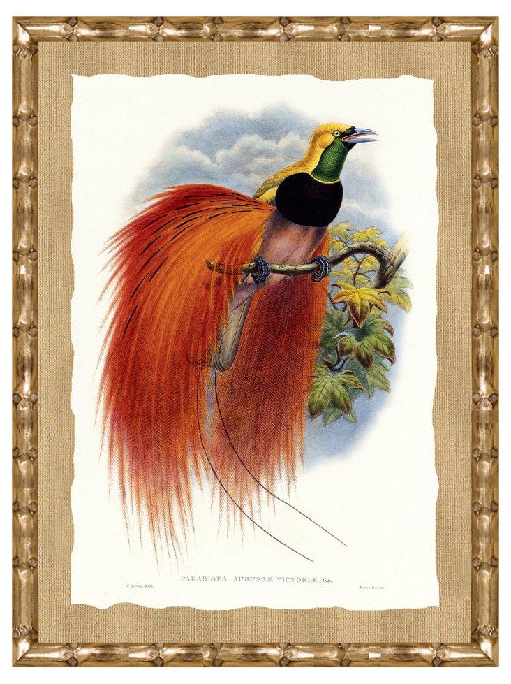 Bamboo Framed Bird Print