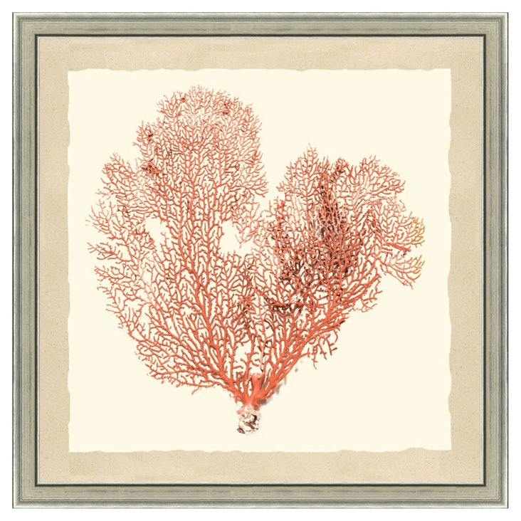 Pink Sea Fan Print II