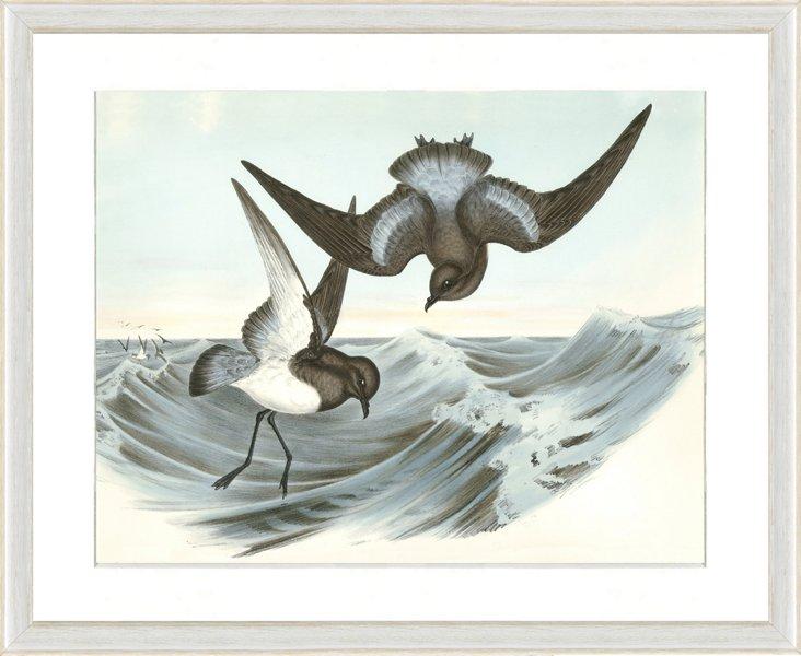 Seabird Print IV