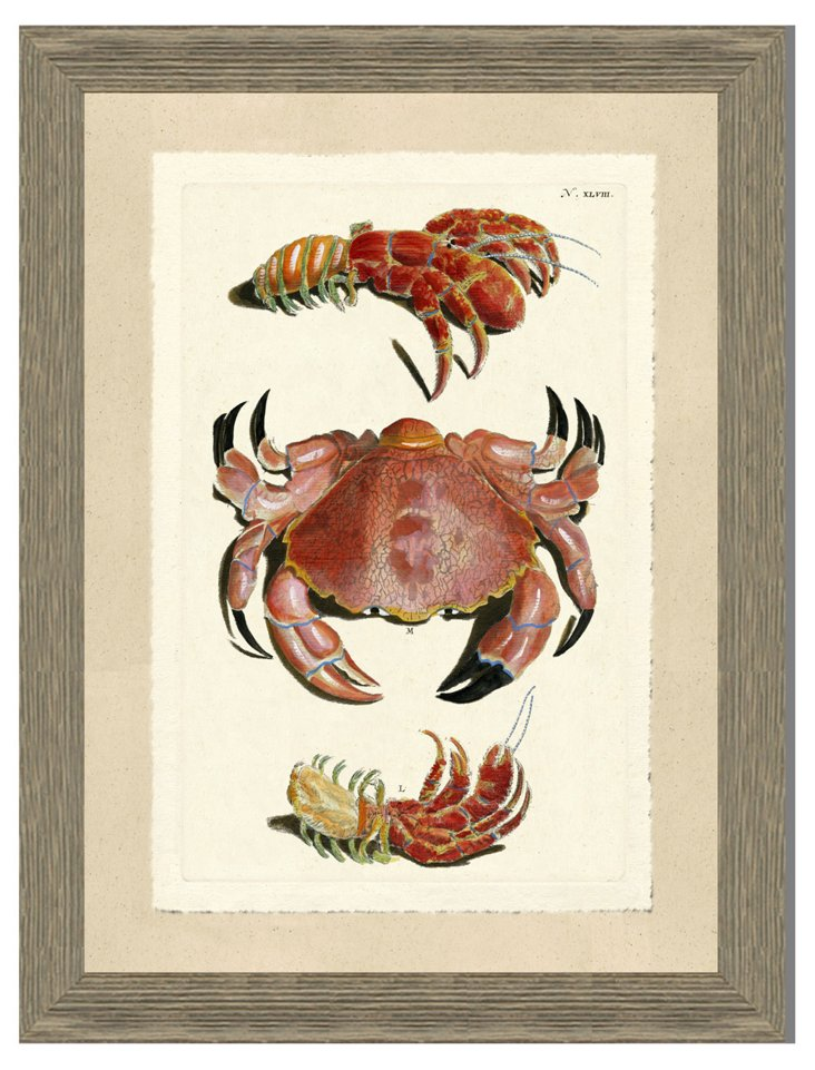 Red Crab Print III