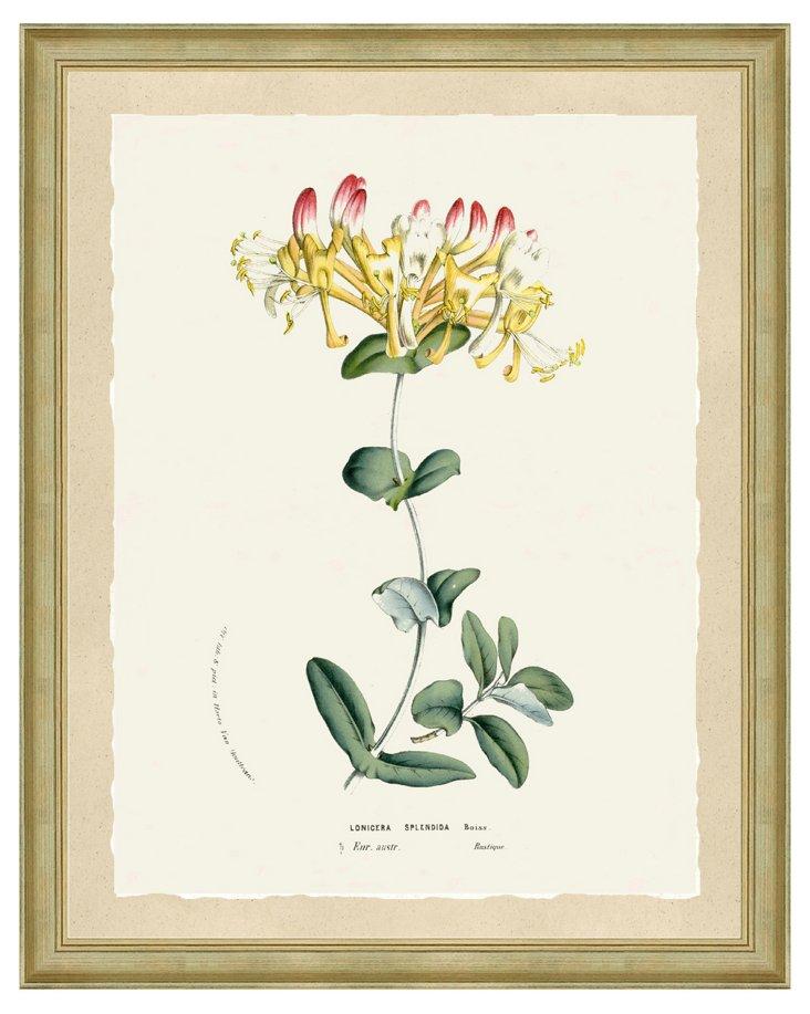 Soft Botanical Print III