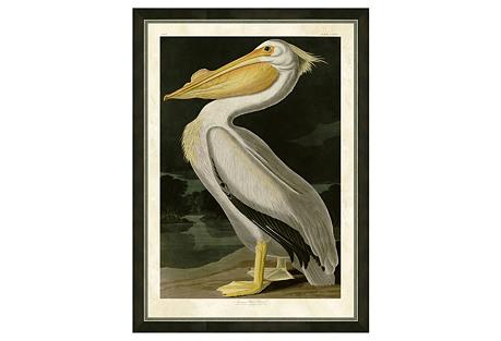 Audubon Pelican Print