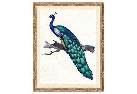 Peacock I