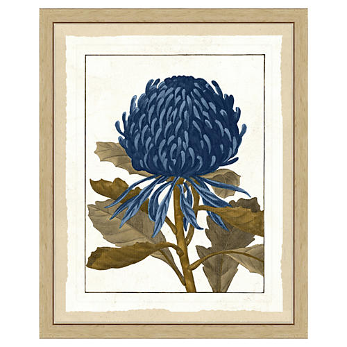 Sepia and Blue Botanical Print I