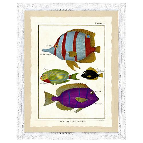 Tropical Fish Print I