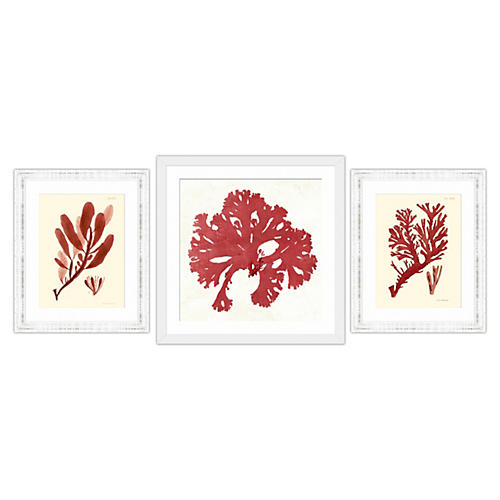 Red Coral Collection