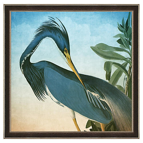 Audubon Heron Print