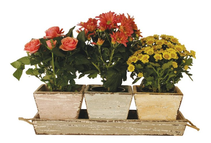 S/3 Wood Planters with Tray