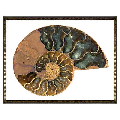 "Gilded Shell I, 42"" x 32"""