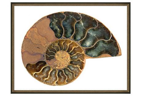 "Gilded Shell I, 42"" x 32"
