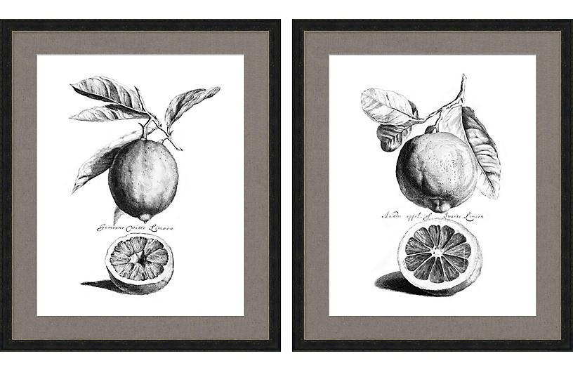 Citrus Drypoint Diptych Art