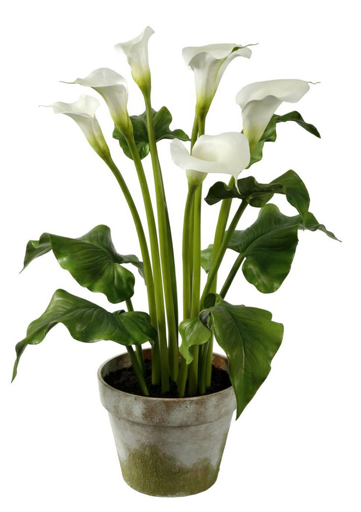 """30"""" Calla Lilies in Clay Pot, Faux"""