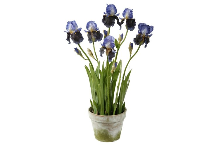 """34"""" Irises in Clay Planter, Faux"""