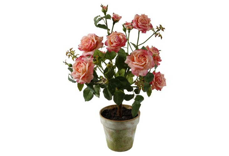 Roses in Clay Pot, Light Pink