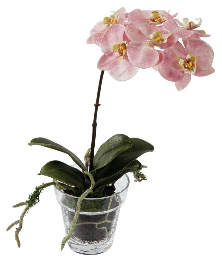 "14"" Phalaenopsis in Glass Planter, Pink"