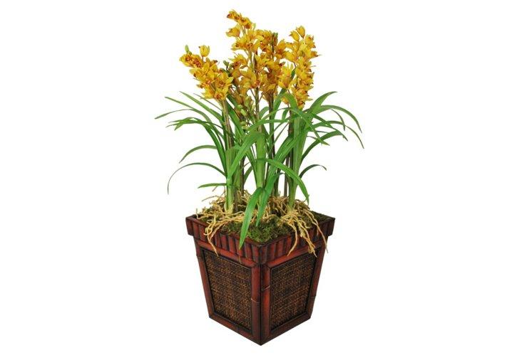 Cymbidium in Bamboo, Yellow