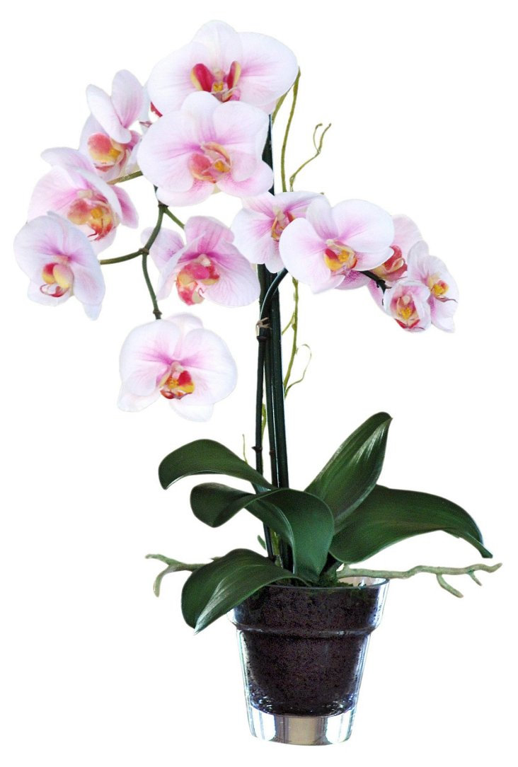"19"" Phalaenopsis in Glass Vase, Faux"