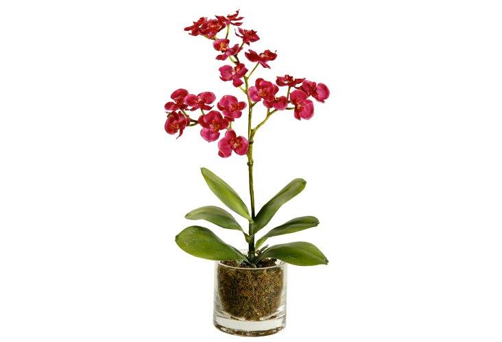 16'' Mini Phalaenopsis in Water