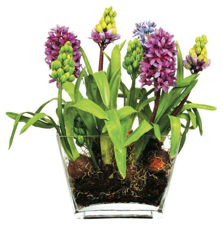 Hyacinth in Glass Planter, Purple & Blue