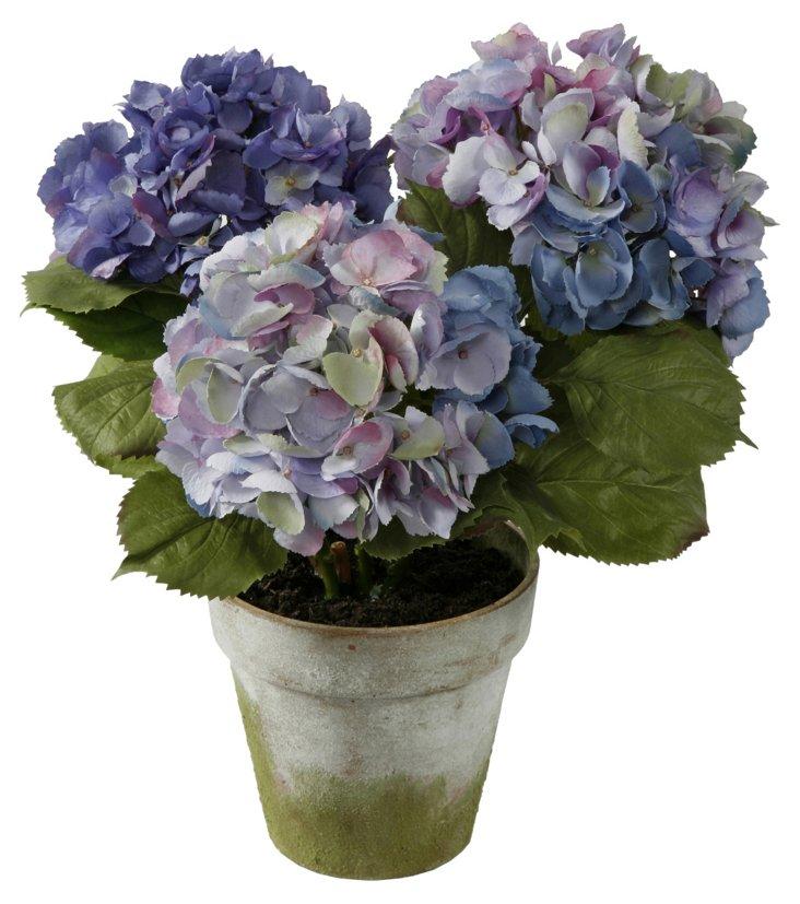 Hydrangea in Pot, Medium, Purple