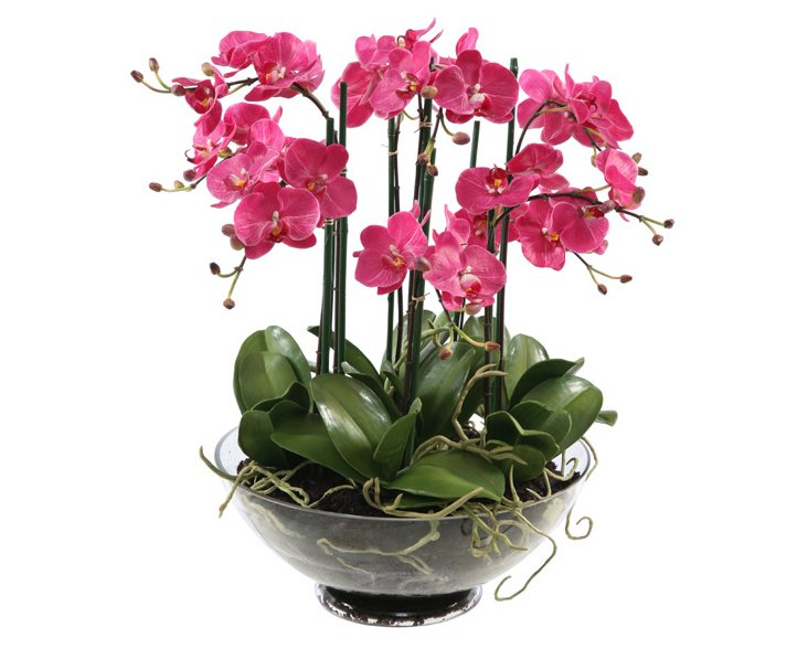 """23"""" Phalaenopsis in Glass Planter, Faux"""