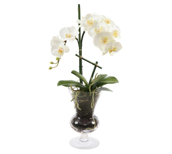 "23"" Phalaenopsis in Glass, Faux"