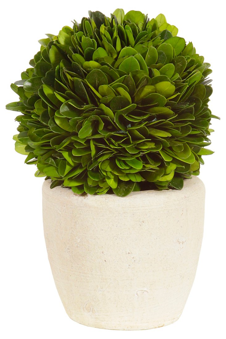 """7"""" Boxwood Ball in Pot, Dried"""