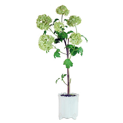 "26"" Snowball Topiary in Planter, Faux"