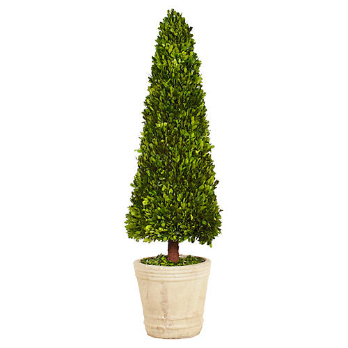 4' Boxwood Topiary in Pot, Preserved