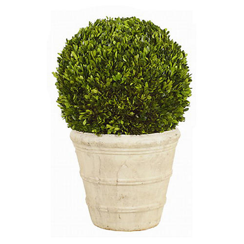 "30"" Boxwood Ball Topiary in Planter"