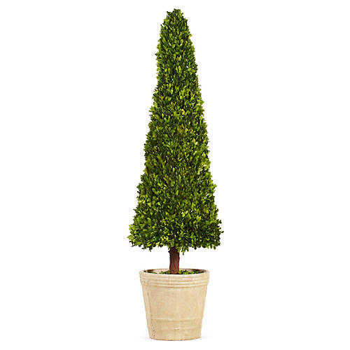 5' Boxwood Cone Topiary