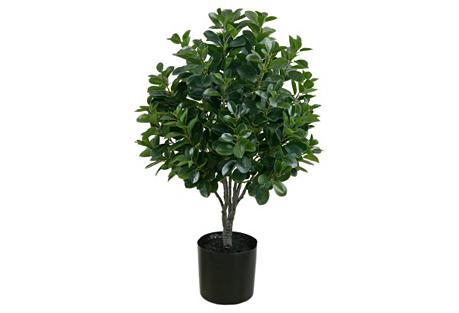 3' Italian Ficus Topiary, Faux