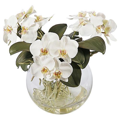 """11"""" Paros Orchid Arrangement, Faux"""