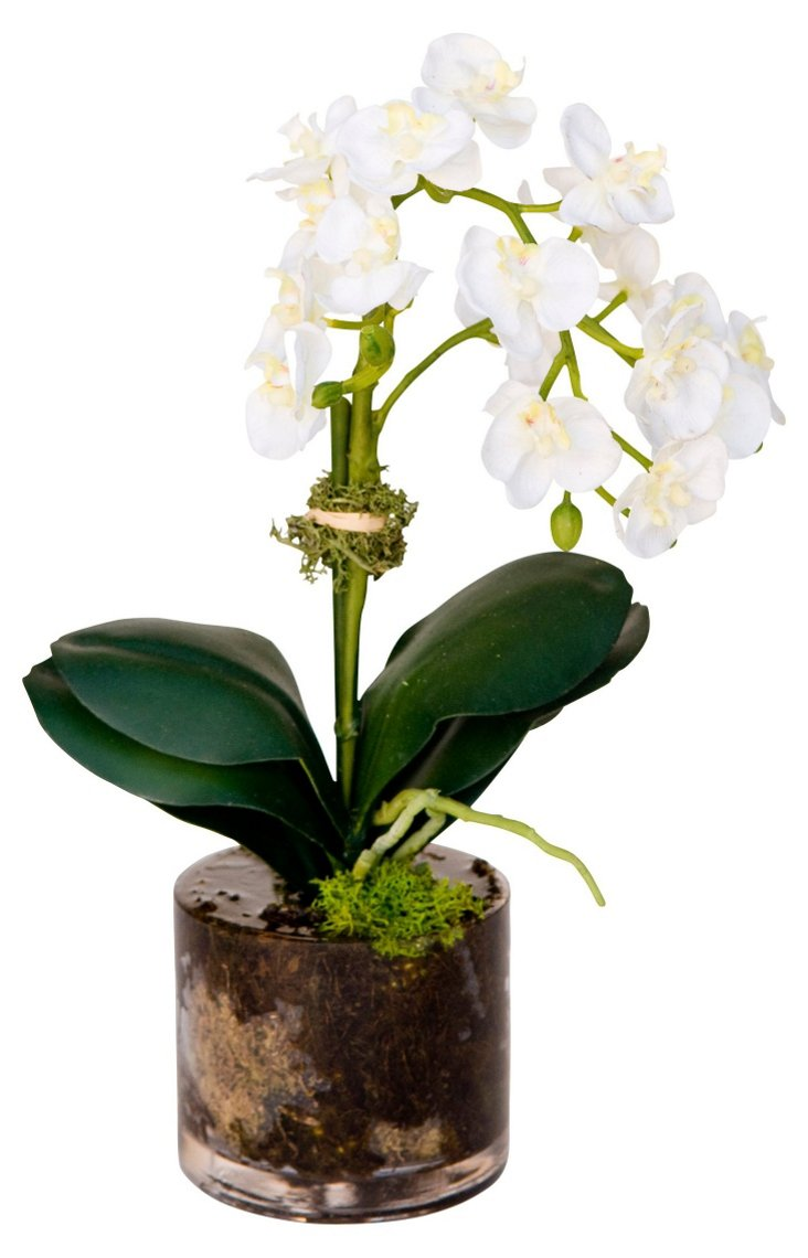 "13"" Orchid in Vase, Faux"
