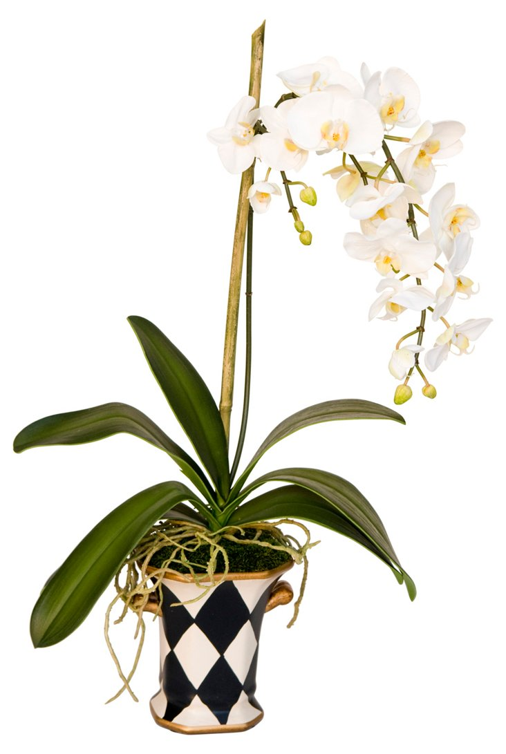 "28"" Phalaenopsis in Planter, White"