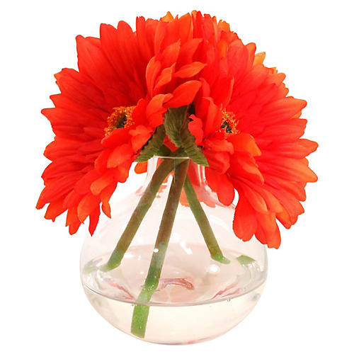 "7"" Gerbera Daisies in Glass Vase, Orange"