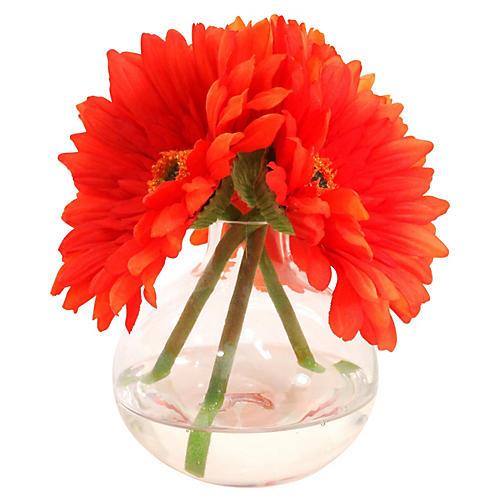"7"" Gerbera Daisies in Glass Vase, Orange"